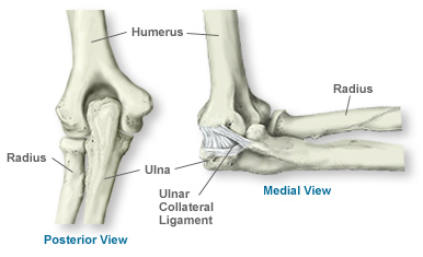 ulna diagram elbow ulna diagram anatomy of the elbow | southern california orthopedic ...